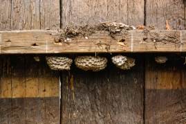 Wasp condo!